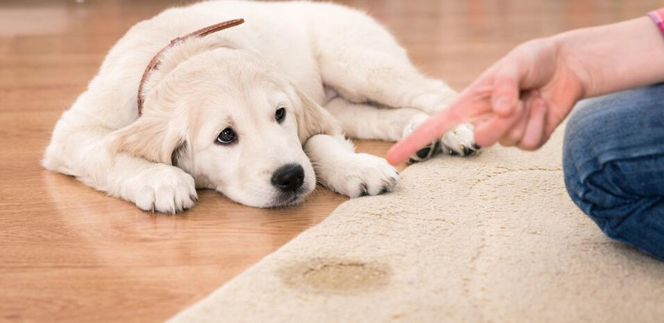 Best Carpet Cleaning Vacuum For Children Or Pets Home