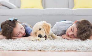 steam vacuum carpet