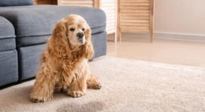 how to wash dog pee out of carpet